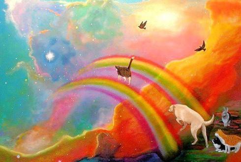 Все коты попадут в рай