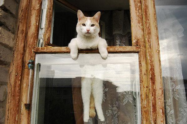 Котик в окошке