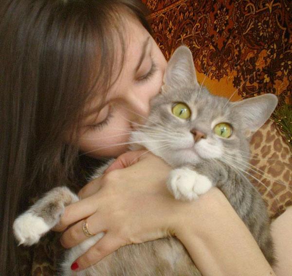 Любимый котик