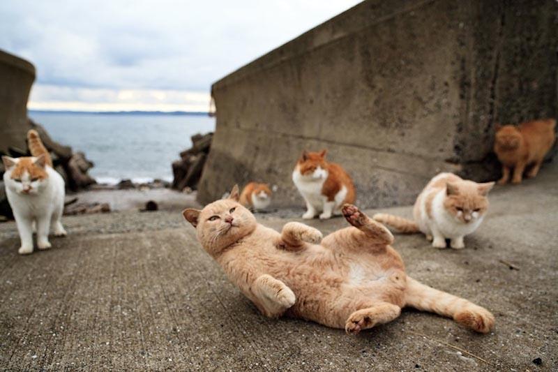 Остров, где кошки значат больше, чем люди: Тасиро, Япония