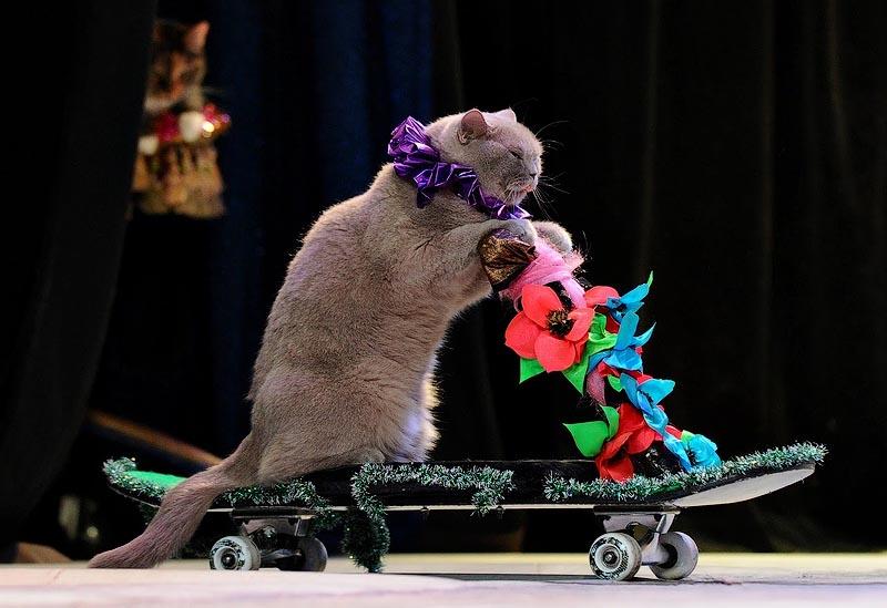Кошки-акробаты выступают в кошачьем театре: Москва