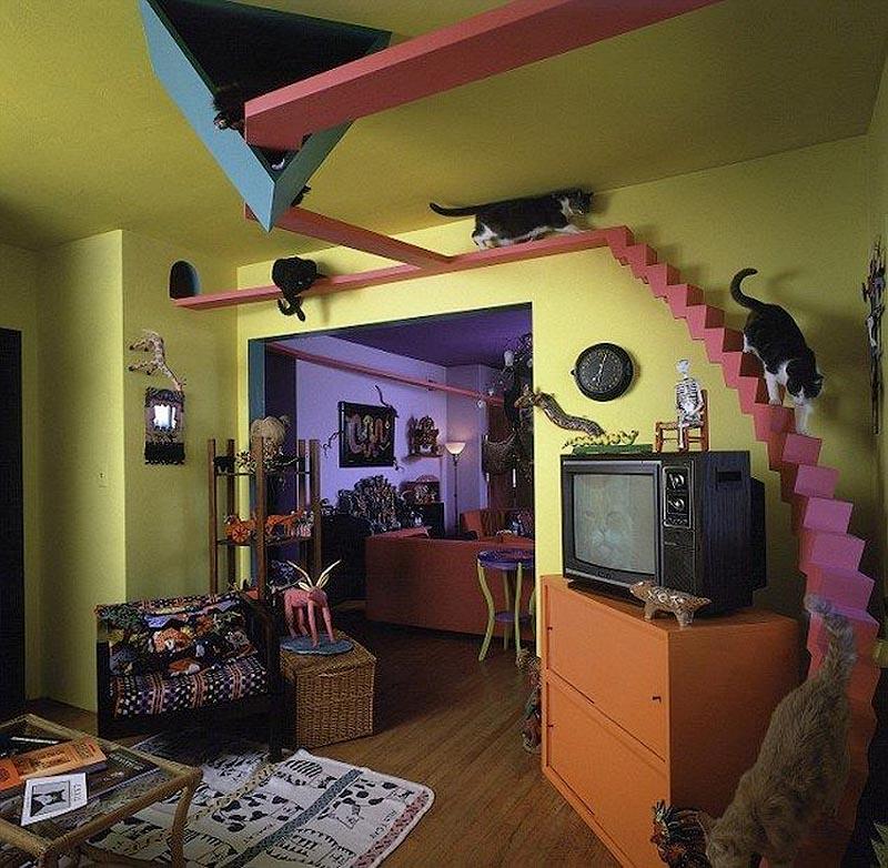 Супруги обустраивают свой дом так, чтобы кошкам в нём было максимально комфортно: Сан-Диего, Калифорния